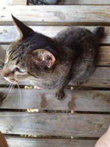 神田キャバクラ【ムーミン(mu-minn)】東京JK制服ラウンジ マキタス家の猫3